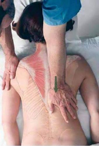 Fisioterapia y Rehabilitacion19